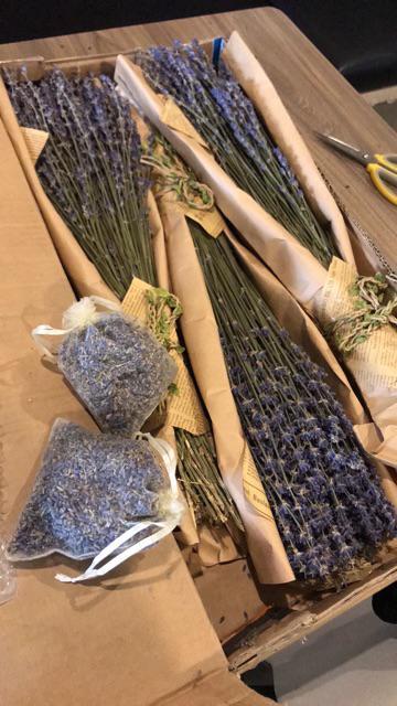 Hướng Dẫn Cách Phơi Hoa Khô Lavender 3