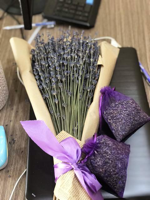 Mua Hoa Oải Hương Lavender Pháp Ở Đâu 2