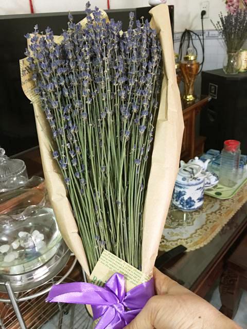 Mua Hoa Oải Hương Lavender Pháp Ở Đâu 3