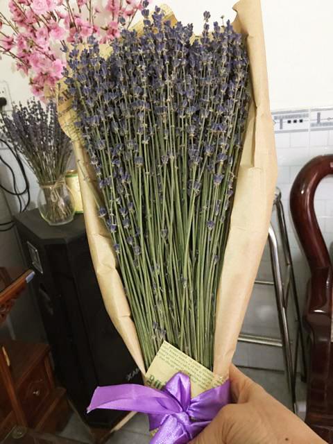 Mua Hoa Oải Hương Lavender Pháp Ở Đâu 4